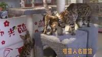 视频: 环亚平台