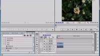 046 premiere CC影视实例编辑-通过时间码特效制作花朵绽放,q群:248477432