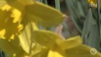 黄色的别墅