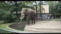 大象是个坏小孩