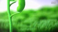 【醉清风制作】会声会影X6模板 种子幼苗生长开花LOGO片头