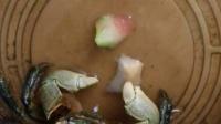 小乌龟吃面包,超萌