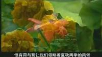二年级语文上册4.古诗两首_赠刘景文flash教学课件