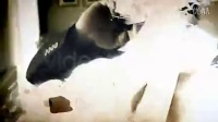NO.901电影宣传预告片头定格效果字幕模板 AE模板 【可代制作】