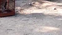 视频: 葫芦岛鸟市QQ群212522667