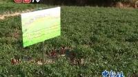 """视频: 贵州凯里尝试经营现实版""""QQ农场"""""""