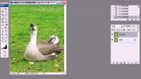 photoshop cs5教程相片ps软件下载淘宝美工培训视频