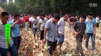 玉米籽粒收获割台