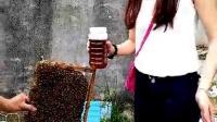 视频: 广东高州天然蜂蜜,微信:qqmarket