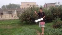 淘宝苹果视频