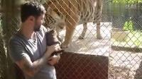 老虎遇到猫是什么表情你知道吗