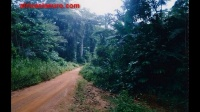 Guinea_video_2_27-8-2014