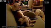 【猴子派】  公牛犬坐沙发上看电视 汪星人是要进化的节奏吗