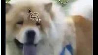 Video_2014-09-17_叶凡老师主讲ps基础第三课【套索工具的使用】