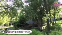 保育員代圓仔華府探親-祖字輩貓熊「寶寶」藏高高 Meet Giant Panda Cub Bao Bao at S