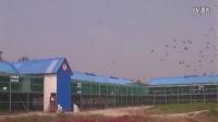 2014年山西鸿运红国际赛鸽公棚30公里训放视频