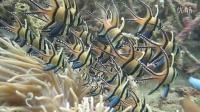泡泡潜水旅游之印尼美娜多,布纳肯自然保育区