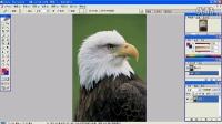 [PS]photoshop教程-界面的基本介绍-第1节