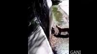Tiger attacks man in Delhi Zoo Tamil hindi telugu