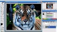 [PS]Photoshop教程 ps教学 ps自学 ps抠图 ps平面设计 ps下载5