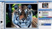 [PS]Photoshop教程 ps教学 ps自学 ps抠图 ps平面设计 ps下载6
