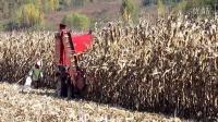 实拍收割机收割玉米