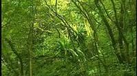 视频: 森林狂想曲_微X:韩束阿胶总代