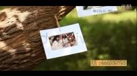 AE 最新电子相册--爱情树