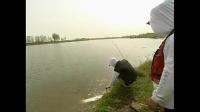 玉米粒钓鲤鱼如何调漂