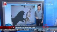 视频: 两只狗狗打架 男子咬伤对方狗主人 超级新闻场 20141019 高清版