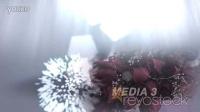 2897[素材TV] 简短的婚礼介绍高清AE模板