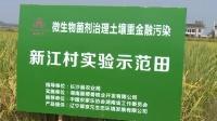 翠京元微生物菌剂在长沙县治理土壤重金属污染效果显著!