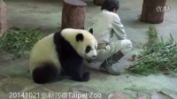 20141021-圆仔偷了彪爸的钢杯The Giant Panda Yuan Zai