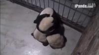 视频: 20141031小团子讨奶