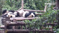 视频: 20141101睡架子