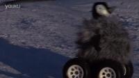 【Youtube奇趣精选】企鹅群里有特务!为了拍到企鹅君 也是蛮拼的