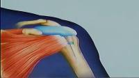 玻璃酸钠(施沛特)关节腔注射方法 标清