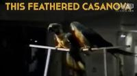 视频: G1级初效过滤器http://www.chuxiaofilter.com/ ccddae20段小动物的爆笑家庭录像集锦[标清版]