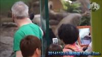 20141122 真的沒啥~圓媽只是有點女兒控The Giant Panda Yuan Zai