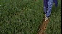 科教葱姜蒜农业病虫防治系列电视片【葱姜蒜蔬菜病虫害防治技术】_标清视频