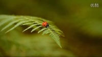[昆虫总动员]超萌小蜘蛛赛车手