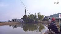 兵库县 伽玛 欧娜地域水库钓到的大鲤鱼!围观 围观