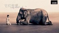 保护动物宣传片_标清