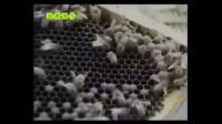 蜜蜂188金宝博官方直营网蜜蜂188金宝博官方直营网大全中蜂188金宝博官方直营网教程视频