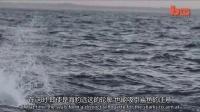 1204南菲海岸大白鲨跃出水面捕食