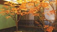 广州圣缘景观 上海仿真树-园林设计公司-适合室内养的竹子