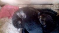视频: 出生不久的小狼狗,来自玺世墙铝http://www.xsql360.com/