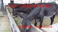 最新驴肉的价格2015驴肉多少钱一斤肉驴多少钱一头