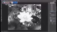 [平面设计]打造数码暗房-水墨重彩莲花(北大青鸟系列高清视频教程)