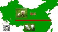羊年话羊:生肖羊究竟是什么羊?